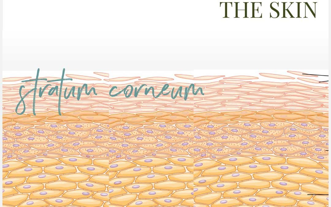 The skin barrier function